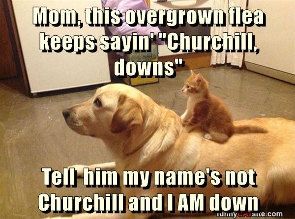 "Mom, this overgrown flea keeps sayin' ""Churchill, downs""  Tell  him my name's not Churchill and I AM down"