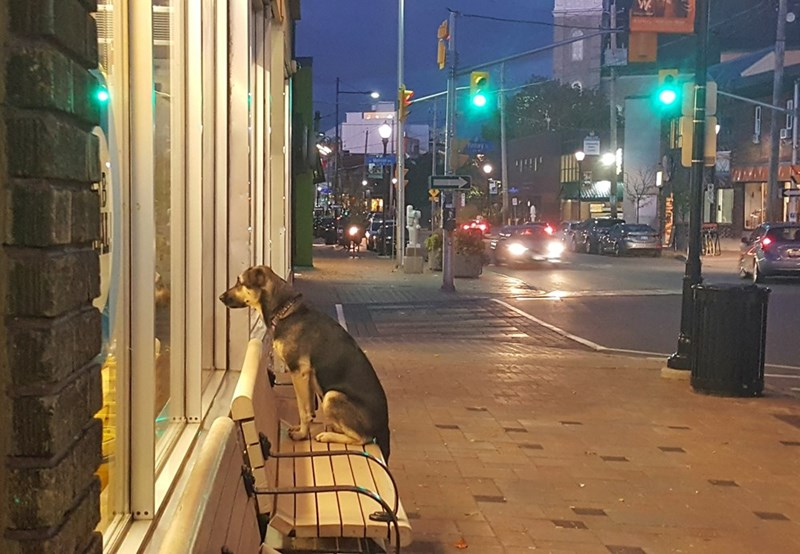 dogs,loyal,waiting