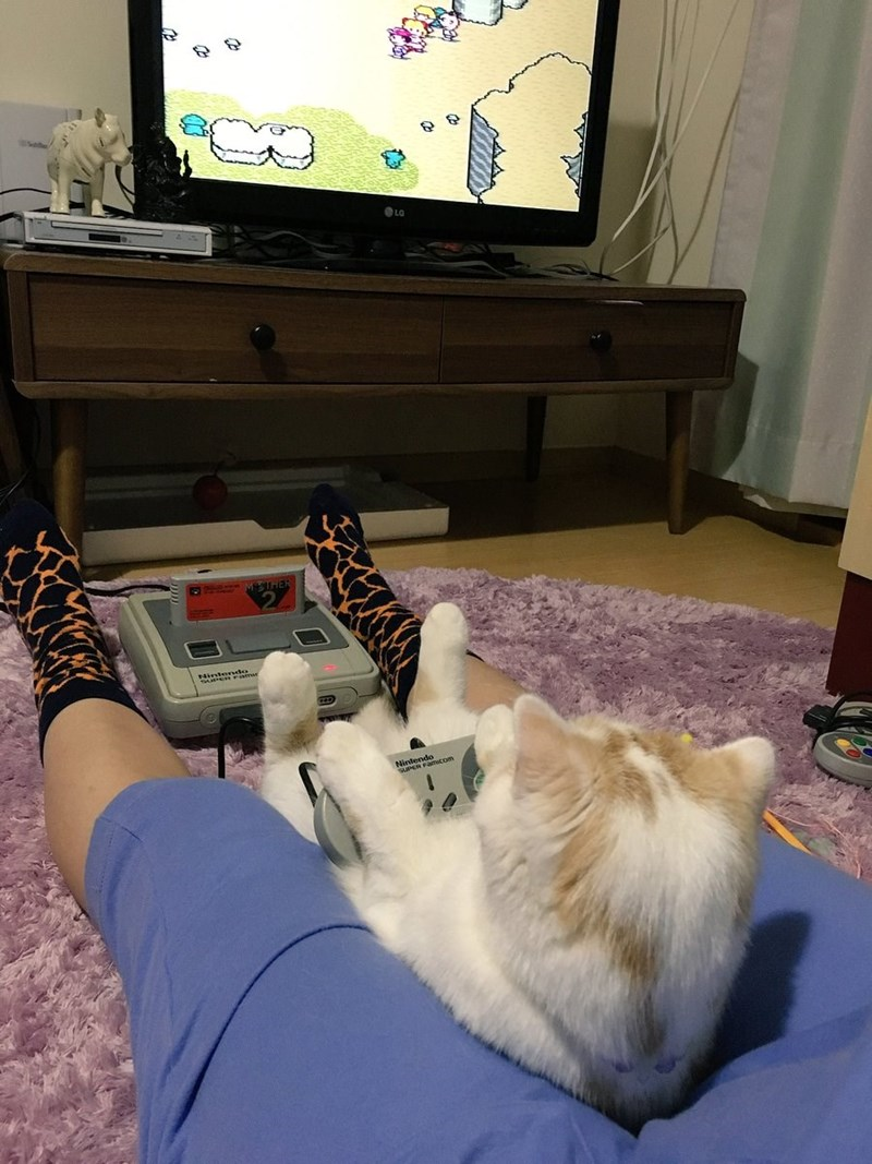 Cute cat playing video games with their owner in what should be seen as a huge relationship goal for anyone who owns a pet.