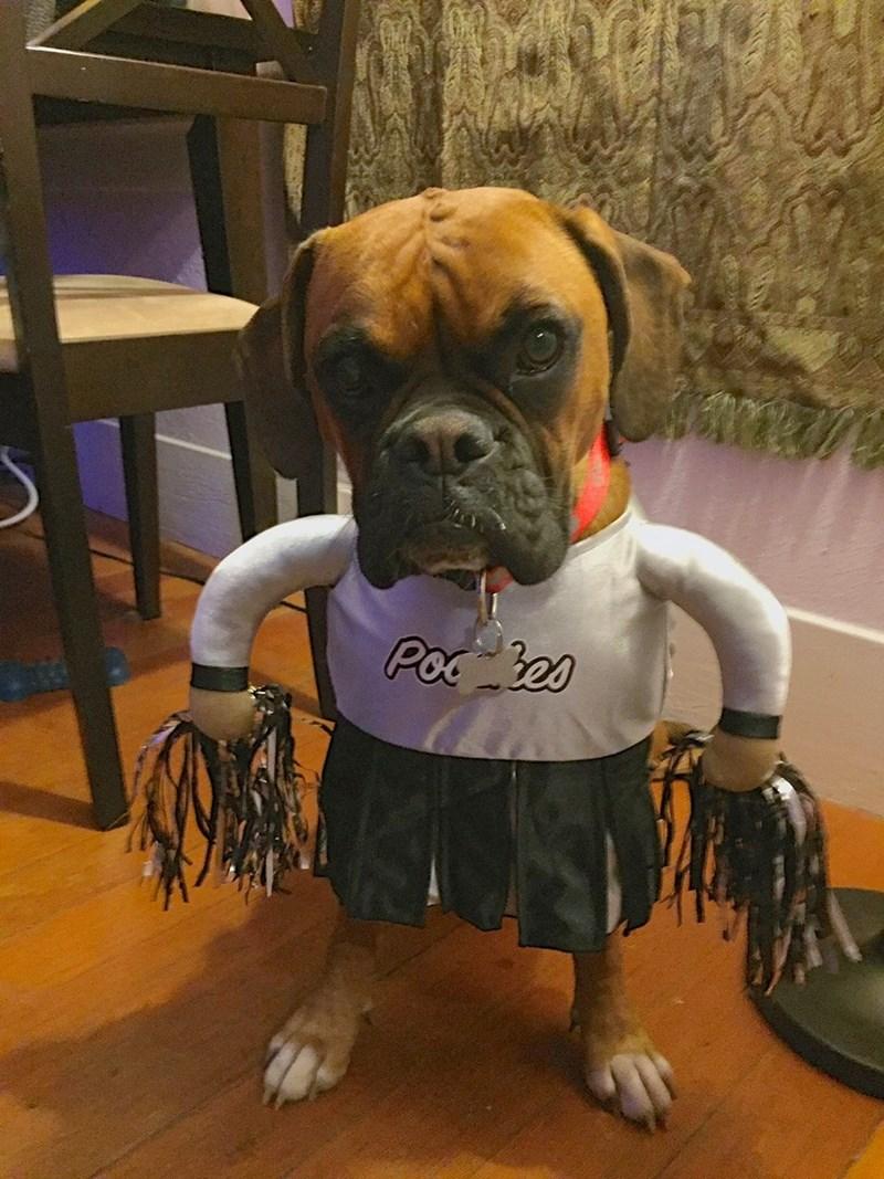 costume dogs cheerleaders - 8985499136