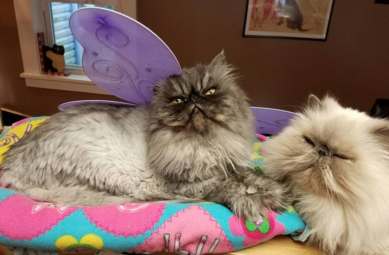 costume butterfly Cats - 8985509632