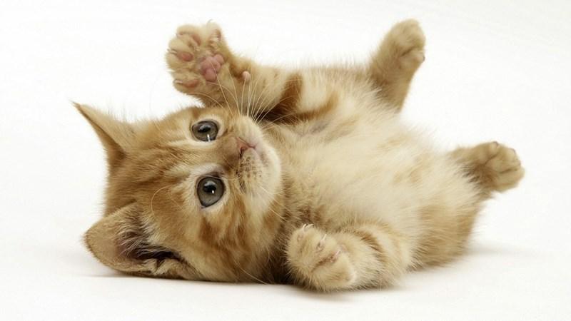 Super Kjoot Kitten
