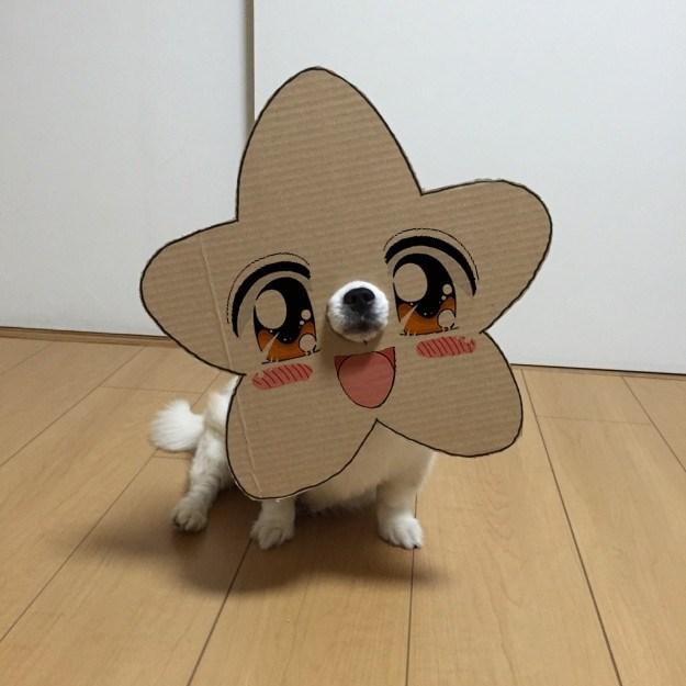 Dog - G