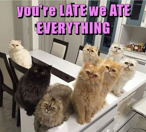 you're LATE we ATE EVERYTHING