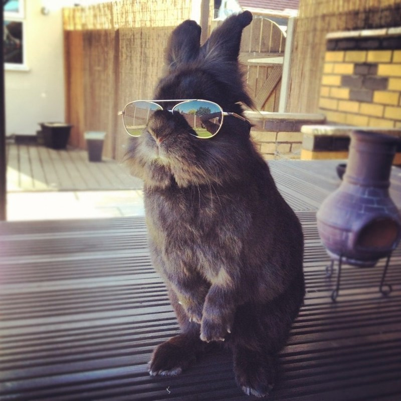 rabbit with sunglasses that was the template for the photoshop battle