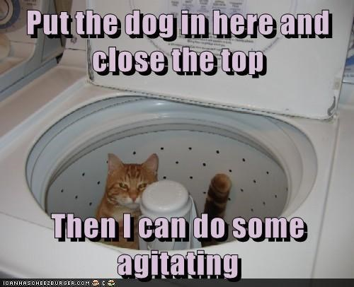 funny cat memes washing machine Cats - 8985813760