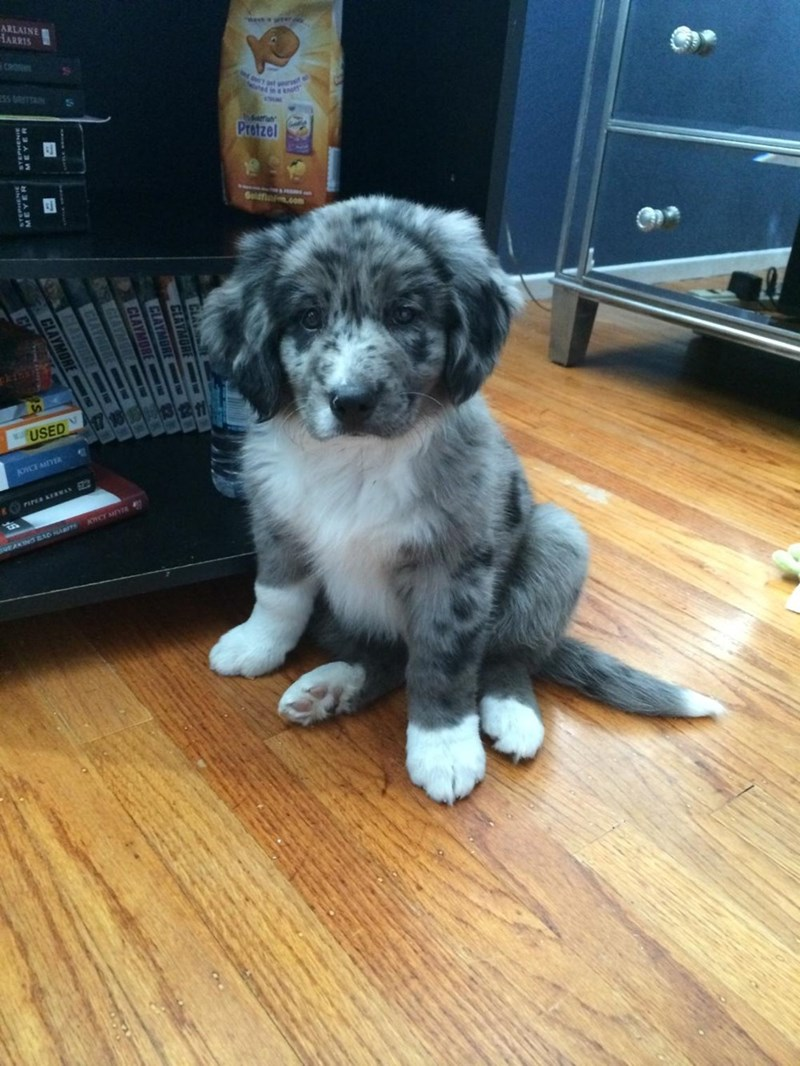 dogs puppy - 8985999616