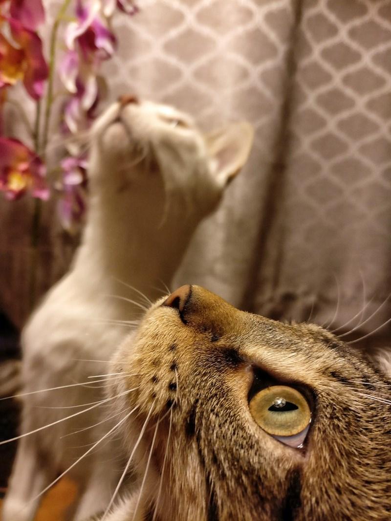 Cats - 8986000640
