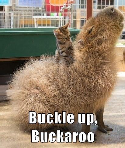 Buckle up, Buckaroo