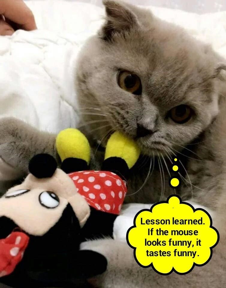 Someone slipped kitty a Mickey  (recaption: http://tinyurl.com/hwnp57e