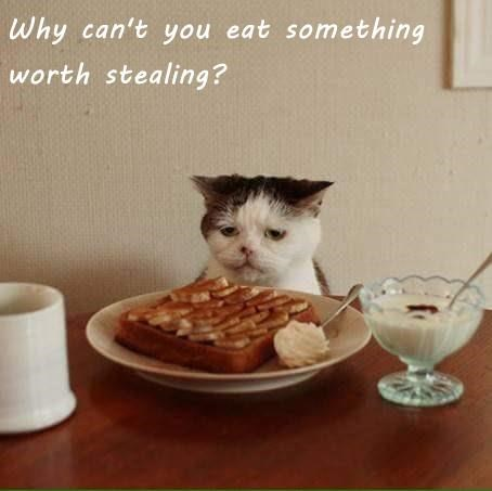 Why can't you eat something worth stealing?