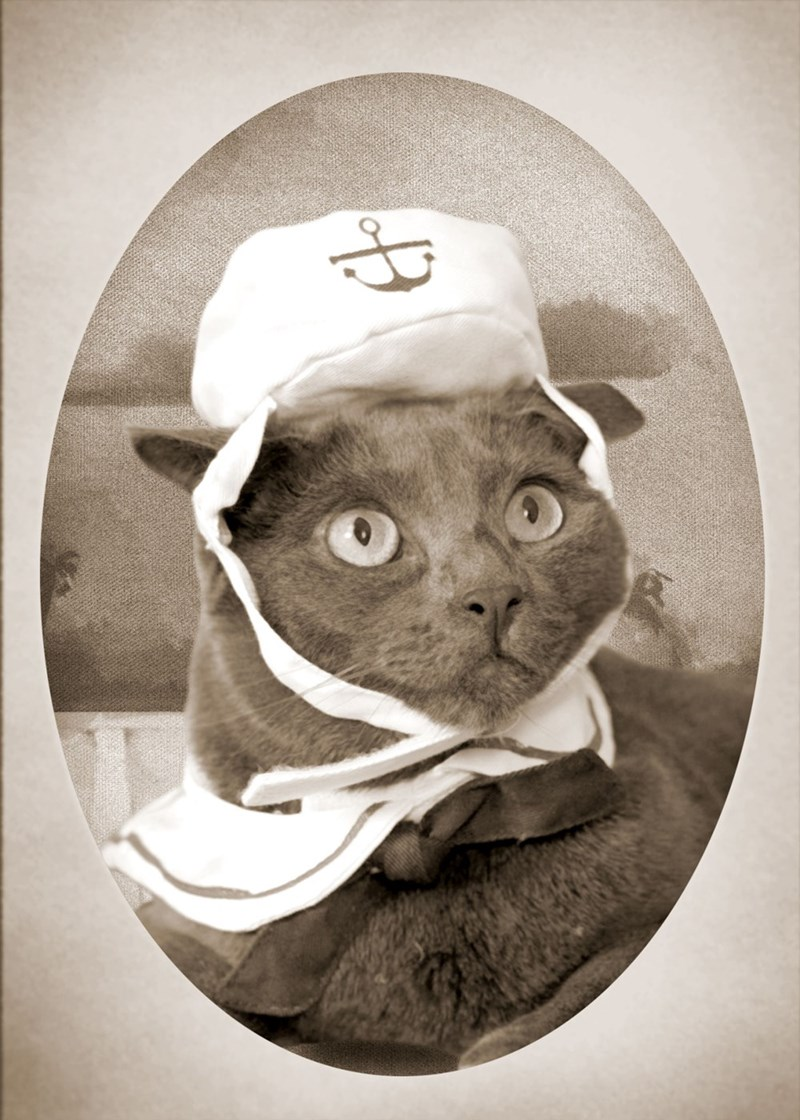 ask your cat about the feline navy