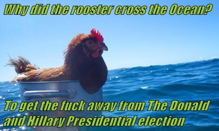 Why did the rooster cross the Ocean?   To get the f*ck away from The Donald and Hillary Presidential election