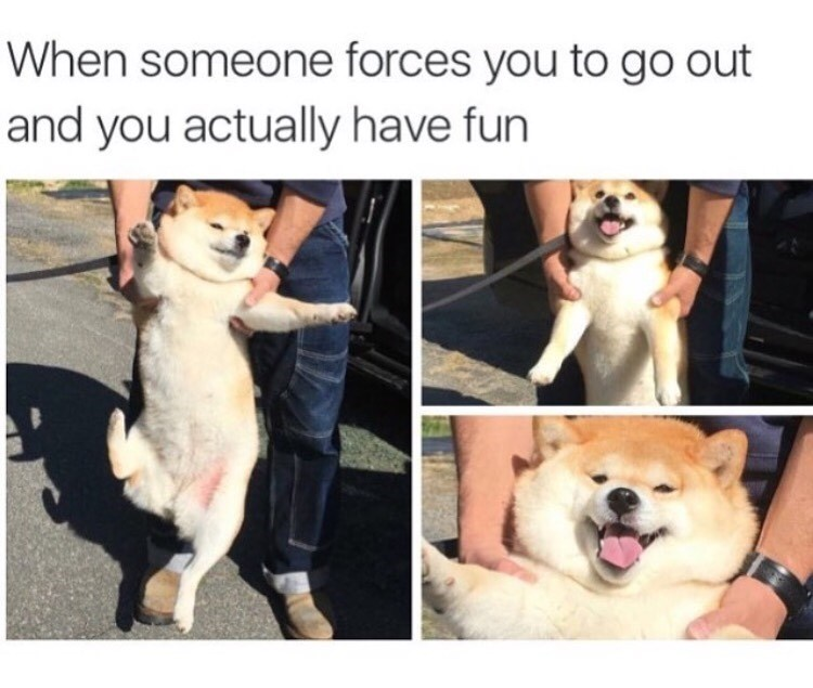 fun dogs image - 8986346496