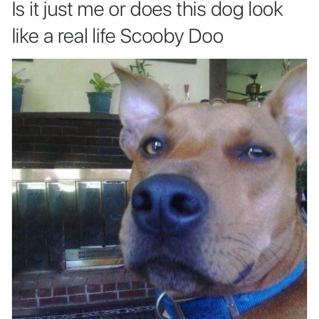 scooby doo,dogs,totally looks like,image