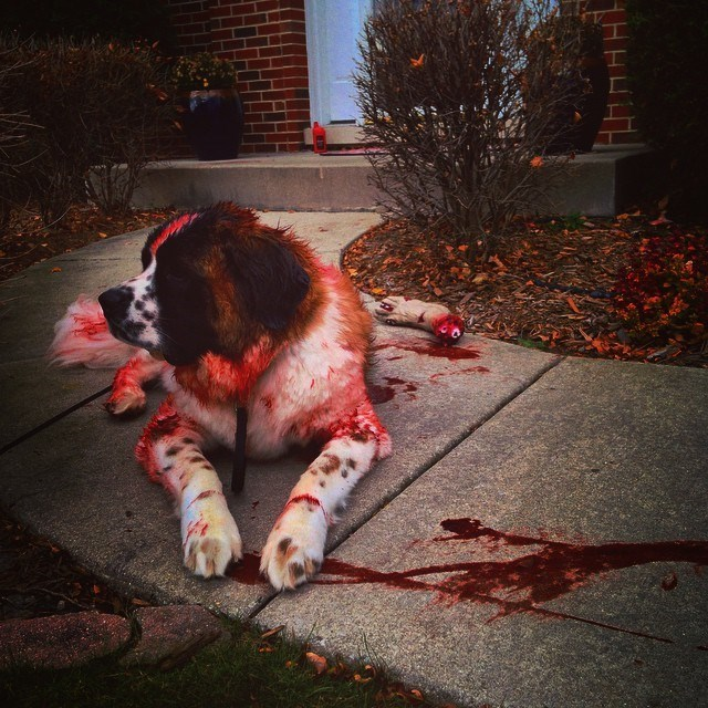 costume cujo scary dogs - 8986710016