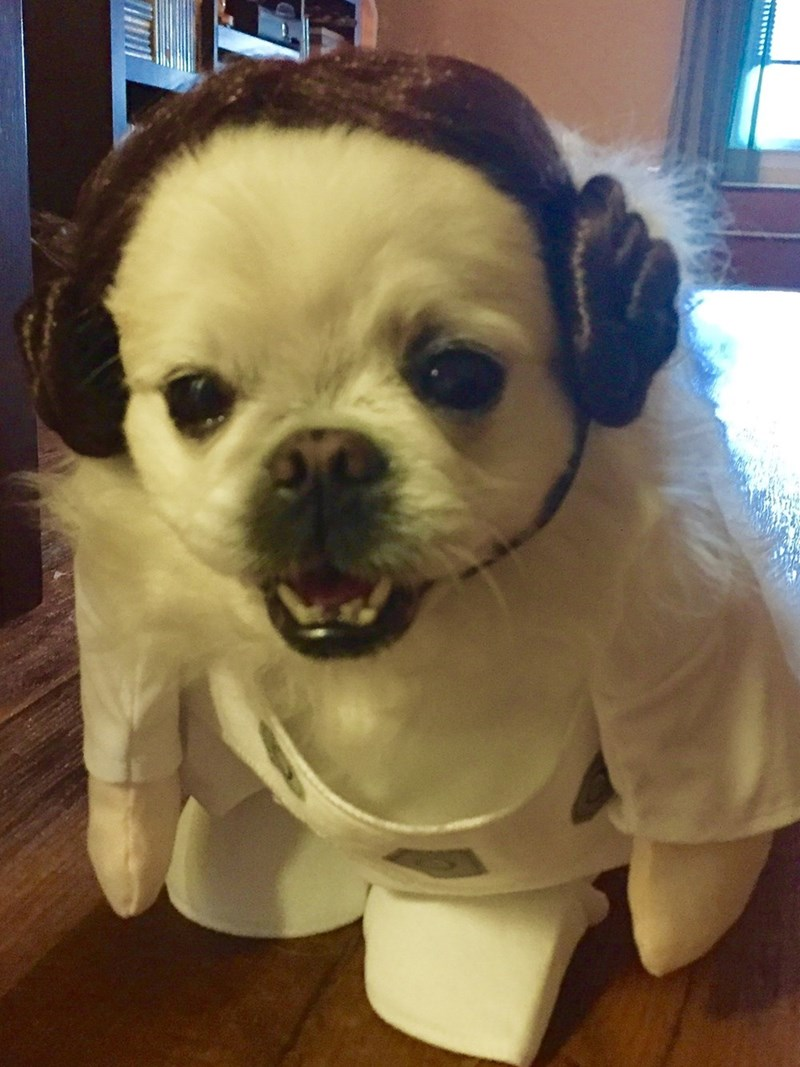 costume dogs Princess Leia - 8986711040
