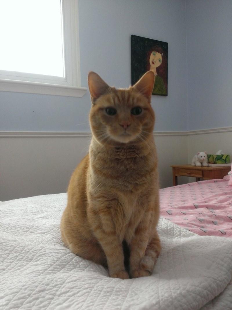 Cats - 8986711552