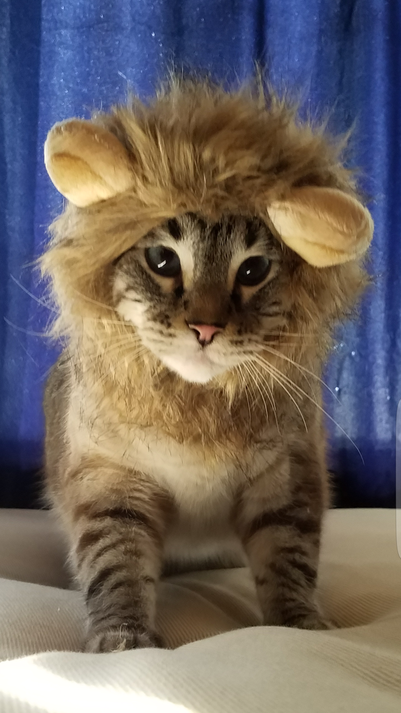 costume lion Cats - 8986711808
