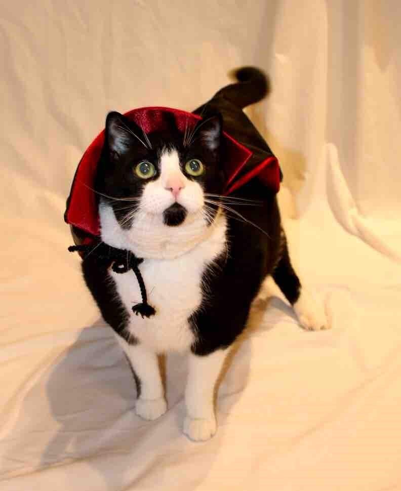 costume vampires Cats - 8986712064