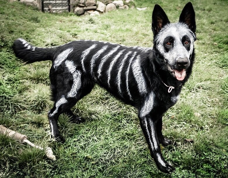 dogs,skeleton