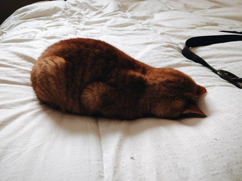 Cats face plant - 8986714112