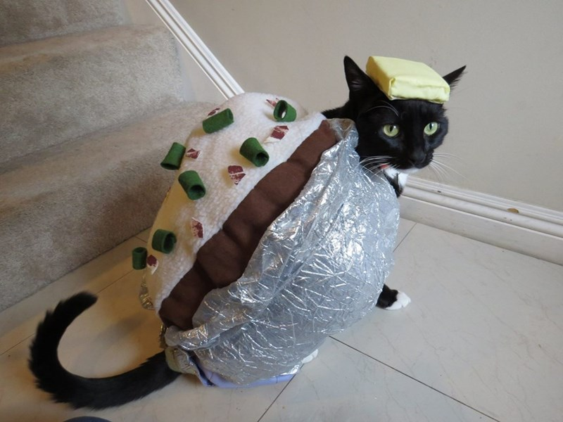Cutest cat dressed up as a baked purr-tato - basically a potato costume that the cat is wrapped up in.