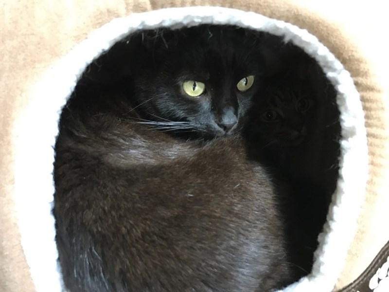 Cats - 8986715648