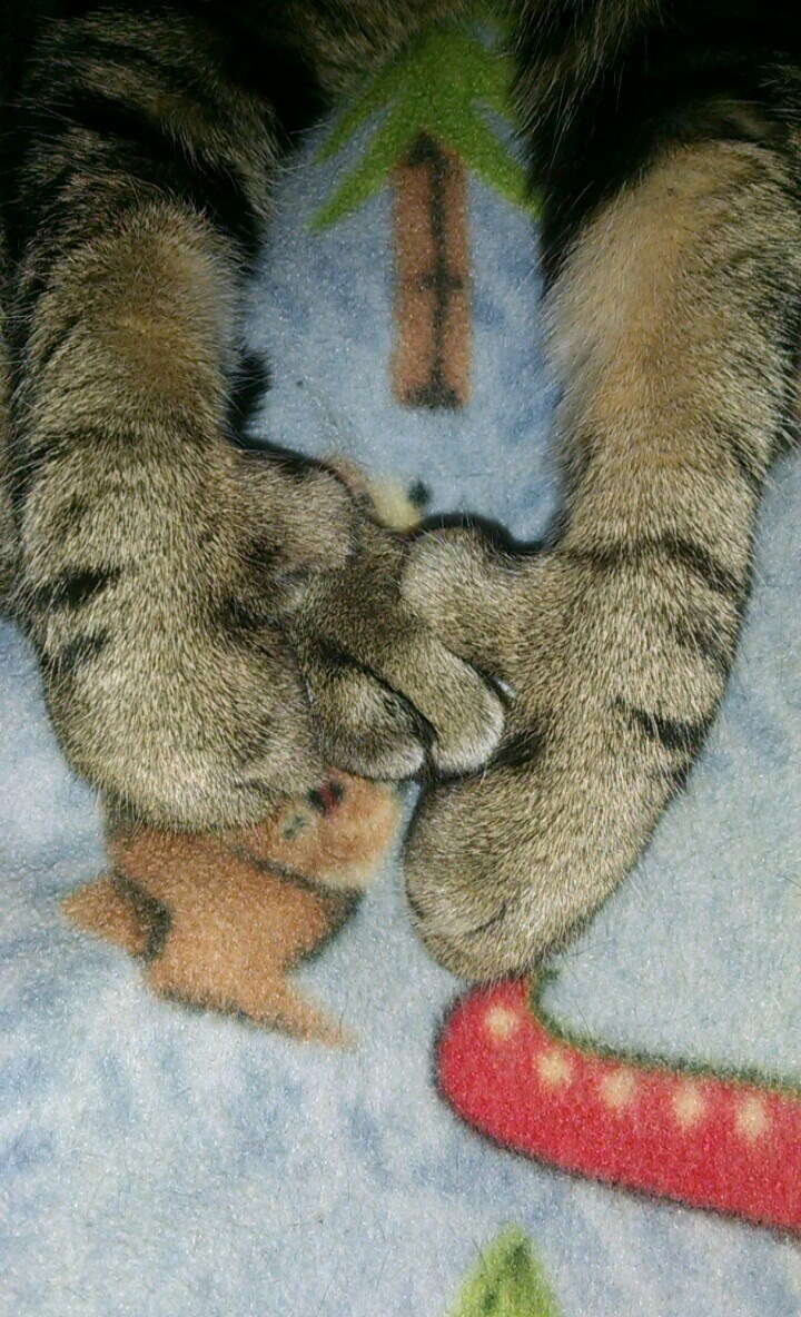 paws Cats - 8986716416