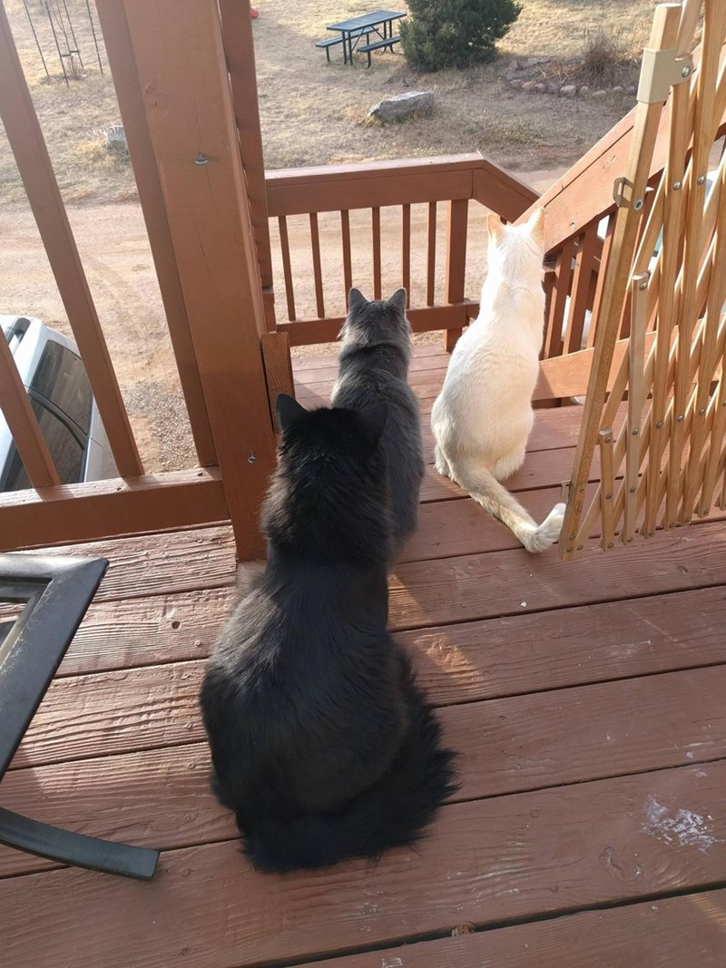 shades Cats