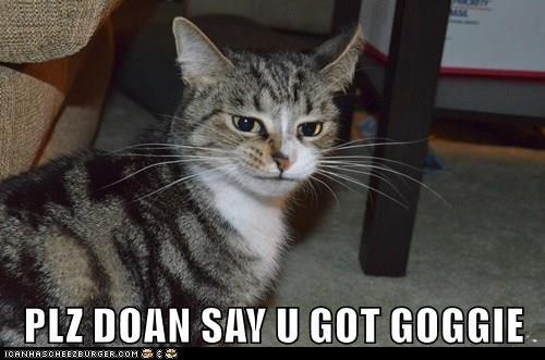 cat say goggie please dont caption got - 8986897664