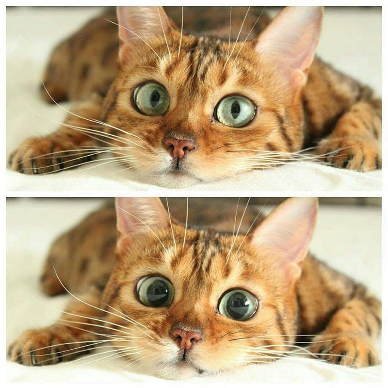 eyes Cats - 8986902784