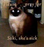 Please       pray for  Saki, she's sick