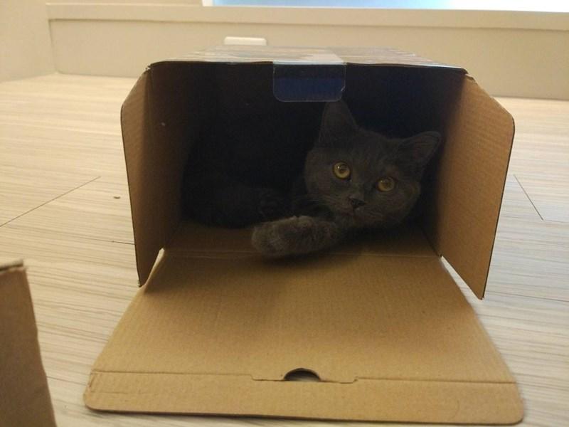 box Cats - 8987375360