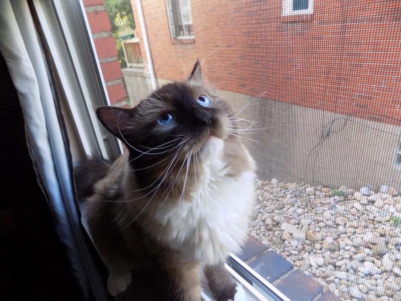 eyes Cats - 8987375872