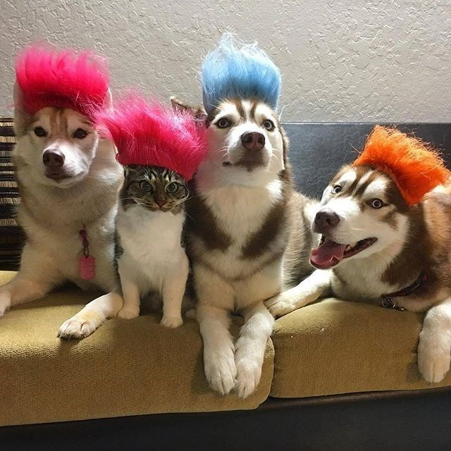 dogs Cats trolls - 8987378432