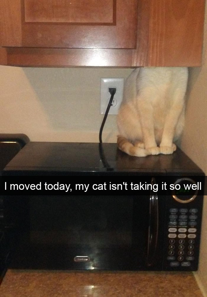 Funny cat picture of a cat that isn't taking the recent move very well.