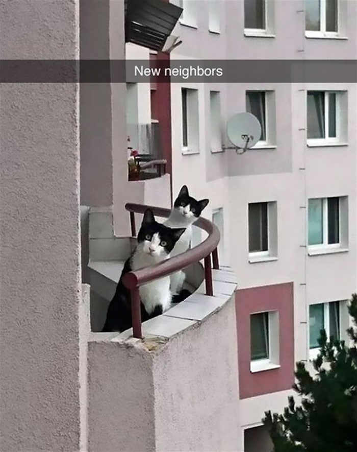 Snapchat cats - funny new neighbors cats sticking their head out the balcony to have a look at you.