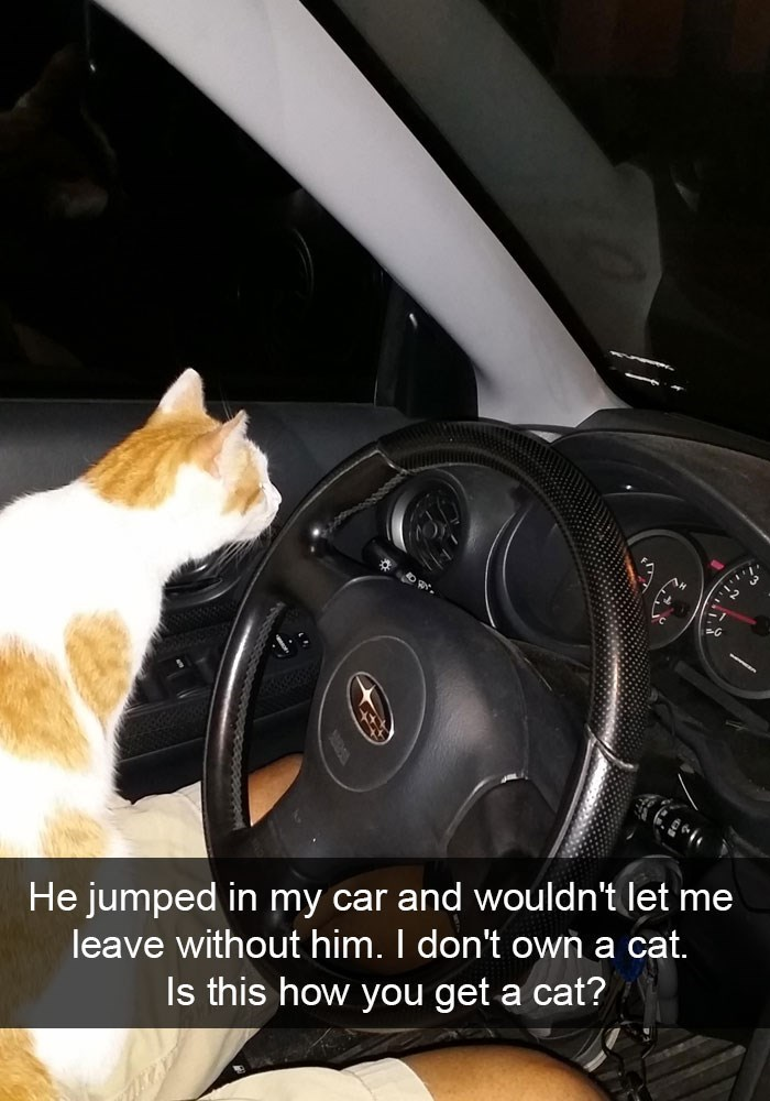 Snap chat of a cat on his lap - and he does not own a cat.