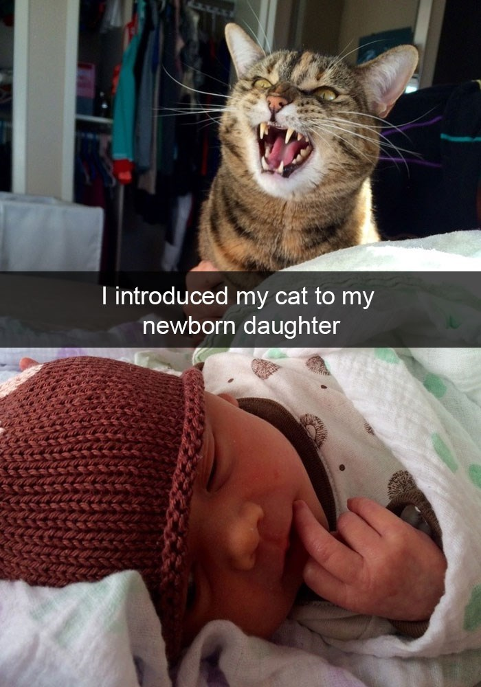 snapchat of cat not enjoying being introduced to his newborn daughter.