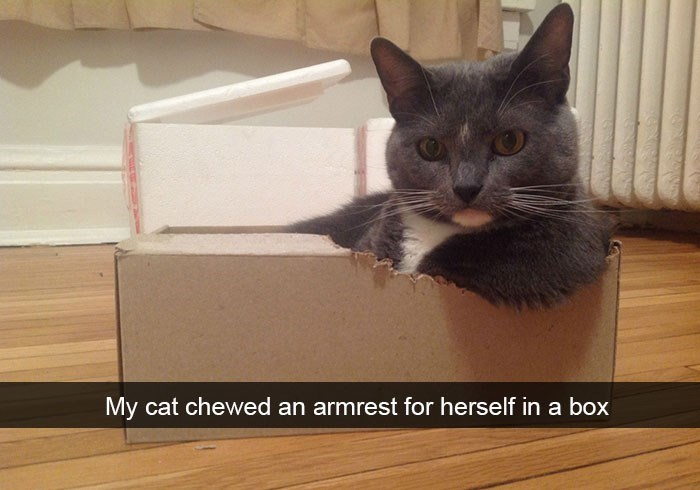 snapchat cats that chewed an armrest for herself out of the box