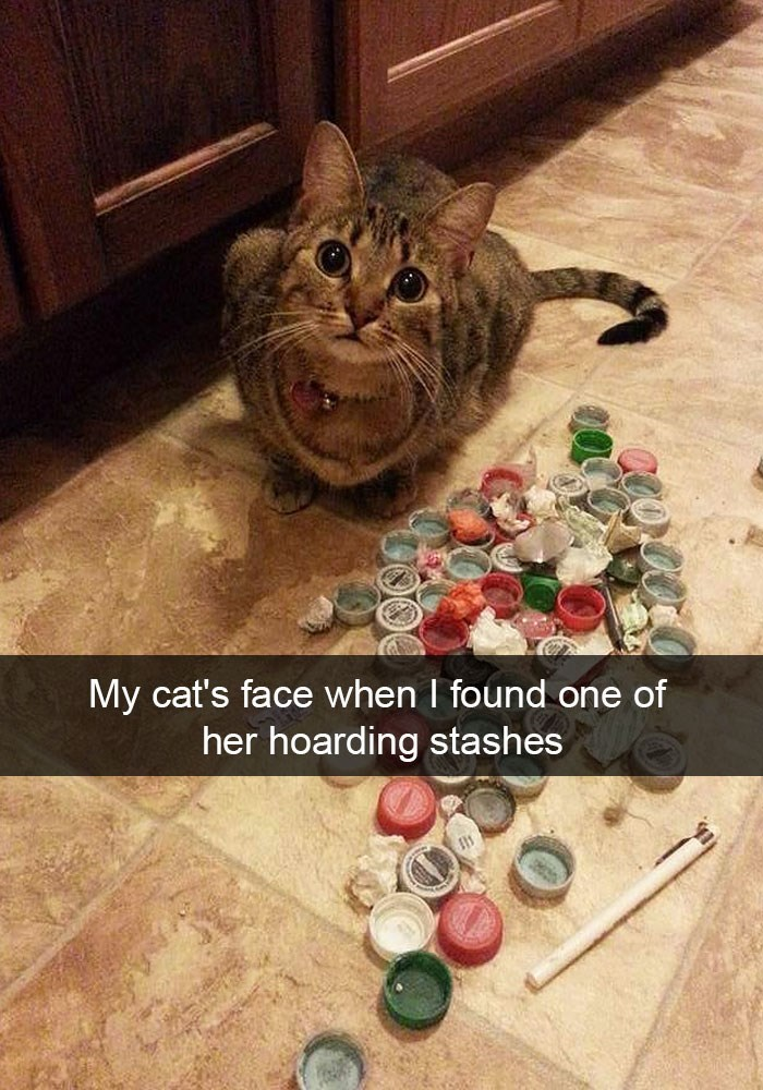 Snapchat of a funny cat's hoarding stashes.