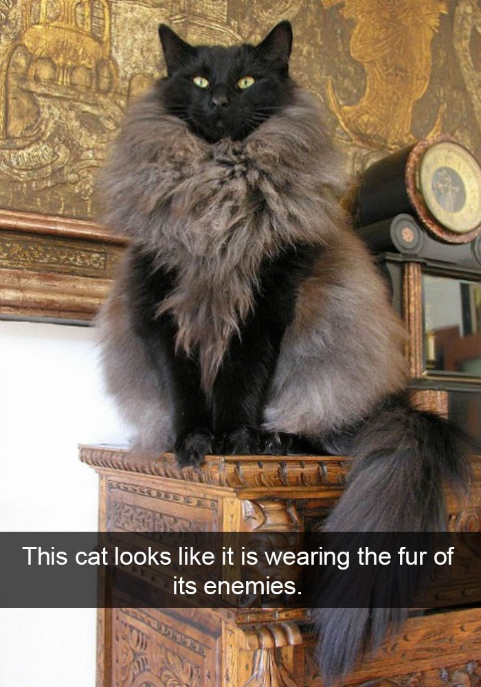 Funny cat on snapchat that looks like he is wearing a fur coat.