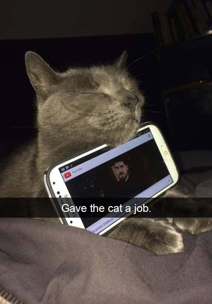 funny snapchat of someone who gave his cat the phone to hold.