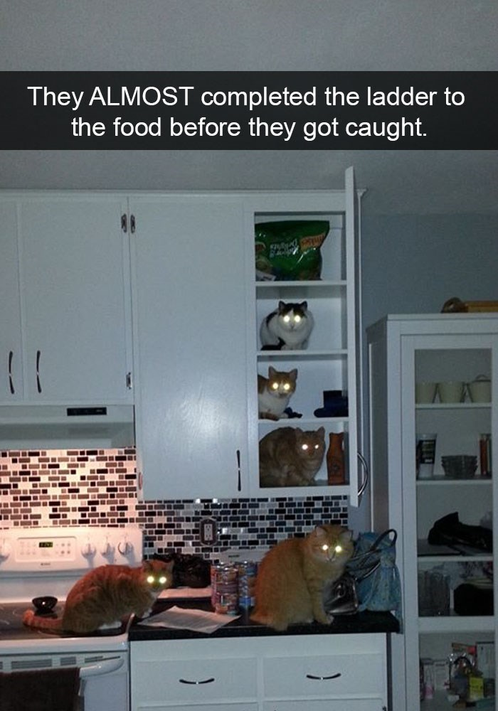Funny snap chat of cats with glowing eyes that almost made it to the food.