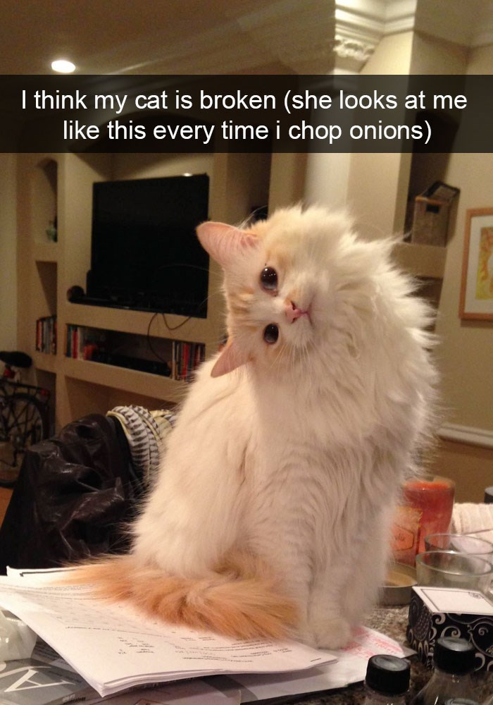 Funny snapchat cat looks sideways when chopping onions.