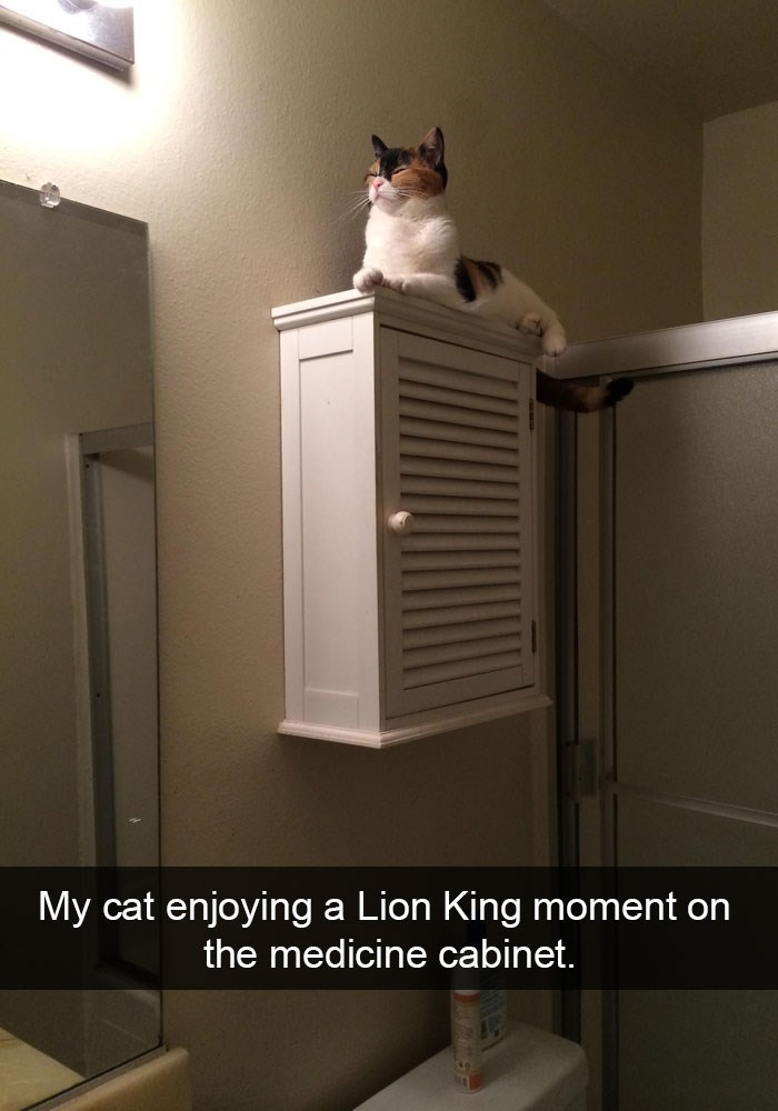 Snapchat cat lion king moment on the medicine cabinet.