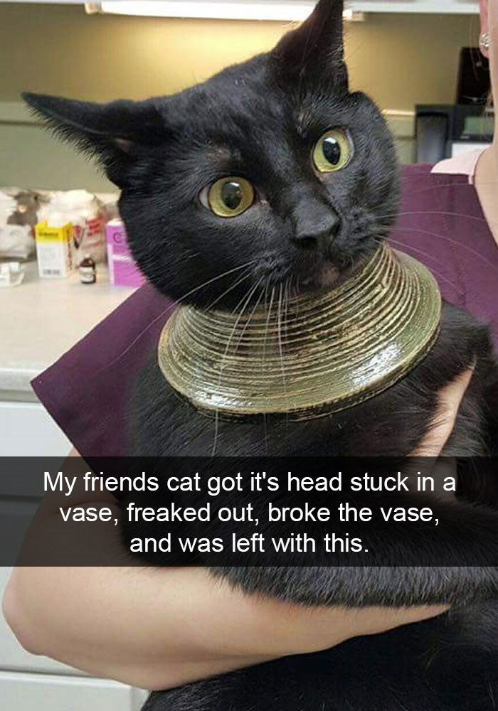 Funny cat on snapchat that got his head stuck in a vase that then broke.