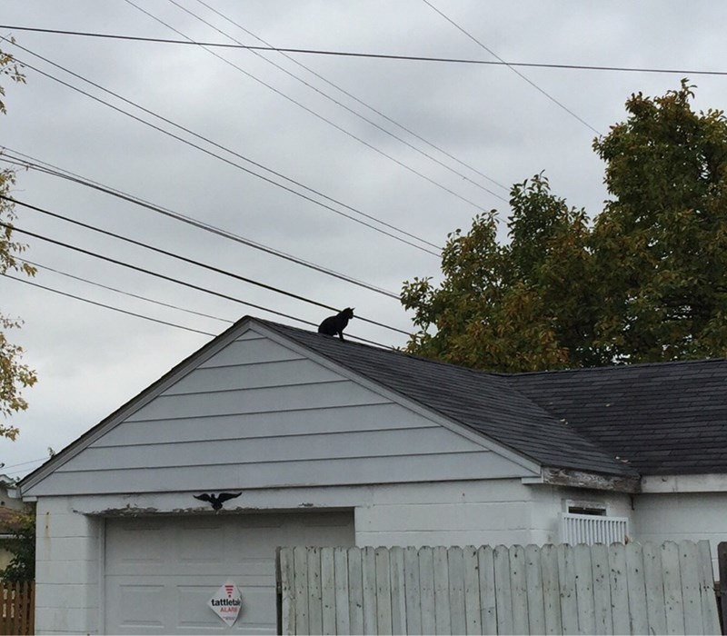 roof Cats - 8987452416