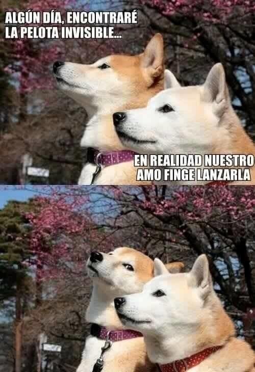 bromas perros Memes animales - 8987491328